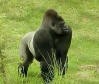 Enciklopedia na Jivotnite - Primat / енциклопедия на животните - примат